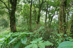 Green jungle with tree rainforest Royalty Free Stock Image