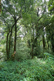 Green jungle with tree rainforest Stock Photos