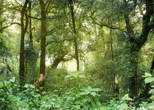 Green jungle with tree rainforest Royalty Free Stock Photo