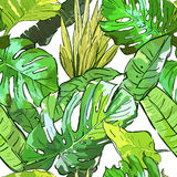 Green jungle vector seamless pattern.  Stock Images
