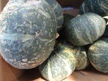 Green kabocha squash, Cucurbita maxima Stock Images