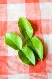 Green Kaffir lime. Citrus x hystrix royalty free stock photo