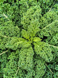 Green kale leaves Royalty Free Stock Image