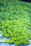 Green kale Stock Images