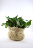 Green kale vegetable in a sack Royalty Free Stock Photography
