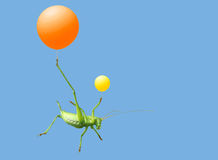 Green katydid and  airballoon Royalty Free Stock Photos