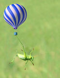 Green katydid and fire balloon Stock Photos