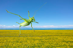Green katydid Stock Photo