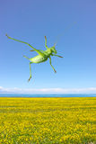 Green katydid Royalty Free Stock Photos