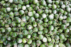 Green Kermit eggplants Royalty Free Stock Photography