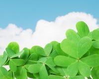 green koniczynę Obrazy Stock