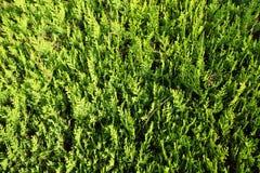 green kwiecista tło Zdjęcie Stock