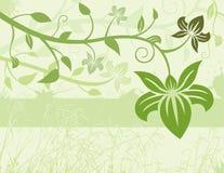 green kwiecista tło Fotografia Royalty Free