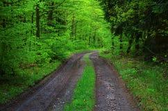 green långt Royaltyfri Fotografi
