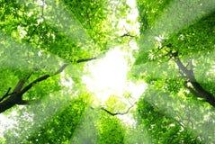 Green låter vara bakgrund royaltyfria bilder