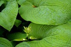 green låter vara frodigt Royaltyfri Fotografi