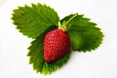green låter vara jordgubben Royaltyfri Bild