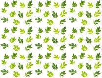 green låter vara modellen Arkivbilder
