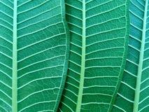 green låter vara naturligt royaltyfria foton