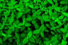 green låter vara raindrops Bakgrund Fotografering för Bildbyråer