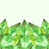 Green låter vara ramen Royaltyfri Foto