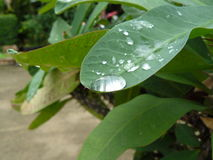 green låter vara regn Arkivfoto
