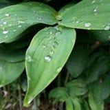 green låter vara regn Arkivbilder