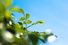 green låter vara skyen Royaltyfri Foto