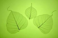 green låter vara textur Royaltyfria Bilder