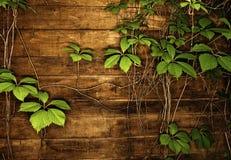 green låter vara textur Fotografering för Bildbyråer