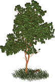 green låter vara treen Royaltyfria Bilder