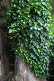 green låter vara treestammen Arkivbild
