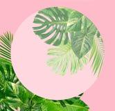 green låter vara tropiskt vektor illustrationer