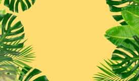 green låter vara tropiskt stock illustrationer
