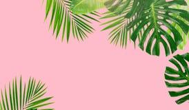 green låter vara tropiskt royaltyfri illustrationer
