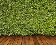 Green låter vara väggen royaltyfria foton