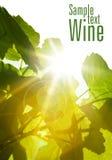 green låter vara wine arkivbilder
