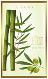 Green label of bamboo and olive. Photo-realistic  illustration. Green label of bamboo and olive Stock Photography