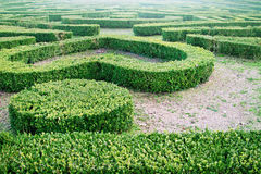 Green labyrinth Stock Images
