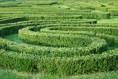 Green labyrinth in the garden Royalty Free Stock Photography