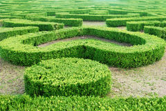 Green labyrinth in the park Stock Photography