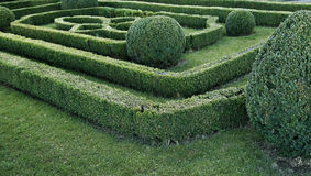 Green labyrinth of trimmed boxwood bushes. In the park stock photos