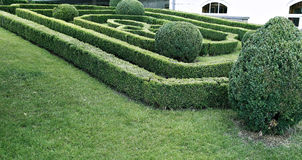 Green labyrinth of trimmed boxwood bushes Royalty Free Stock Photography