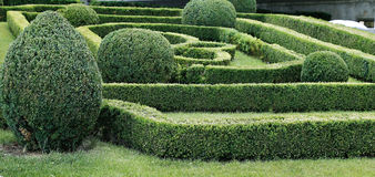 Green labyrinth of trimmed boxwood bushes Stock Photo