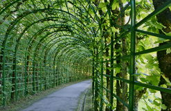 Green labyrinth. A walk on a characteristic green path, in the middle of the Germany Stock Photos
