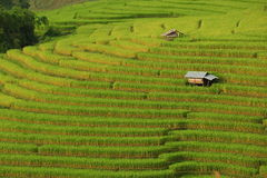 Green ladder rice field Royalty Free Stock Images