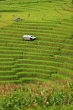 Green ladder rice field Stock Images