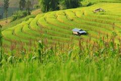 Green ladder rice field Stock Photos