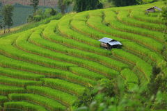 Green ladder rice field Stock Photo