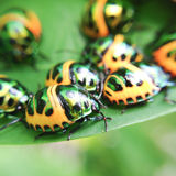Green ladybug in the backyard. Big family of ladybug in the backyard Royalty Free Stock Photos